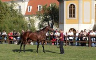 Neu-Stallion Lucky Lion in Graditz