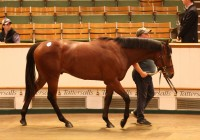 Lot 163 Foto:Tattersalls