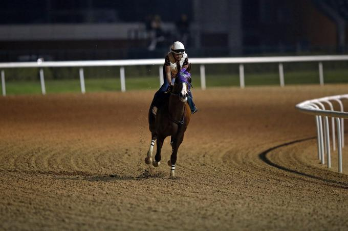 California Chrome beim Trackwork in Meydan 2015