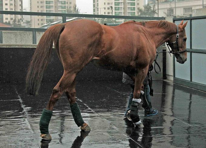 Ankunft von Red Dubawi in Hong Kong