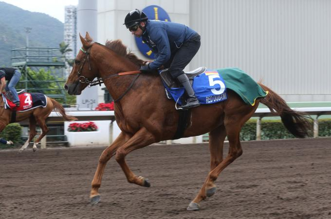 Red Dubawi in Hong Kong auf dem All Weather-Track